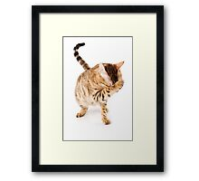Fluffy red kitten Framed Print