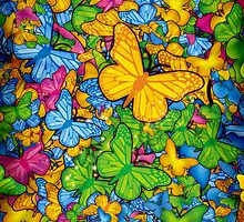 Butterflies by Guilherme Marconi