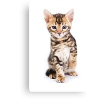 Cute striped ginger kitten Canvas Print