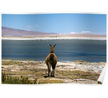 The view at 4500m  - Atacama Desert Poster