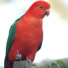 King Parrot by JeniNagy