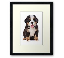 Bern Shepherd Puppy Framed Print