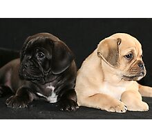 pugalier pups... Photographic Print