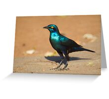 Greater Blue-eared Starling Greeting Card