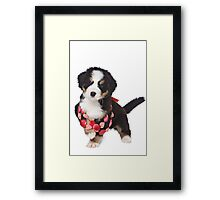 Bern Shepherd puppy and beads Framed Print