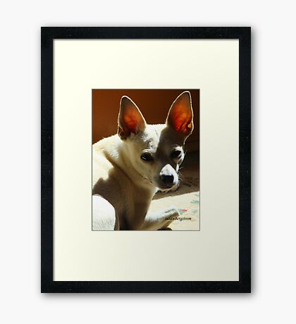 A Place In The Sun Framed Print