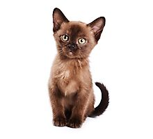 Brown kitten Photographic Print