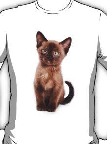 Brown kitten T-Shirt