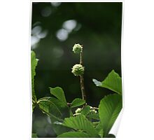 Blooming Conkers Poster