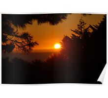 Sunset through the leaves Poster