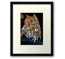 Tiny Bird ~ Part One Framed Print