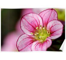 Macro pink flower Poster