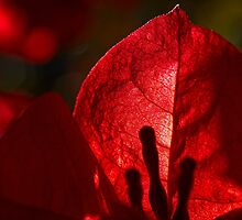 The power of red by Celeste Mookherjee
