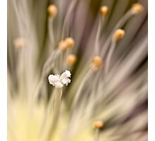 Inner life  of a flower Photographic Print