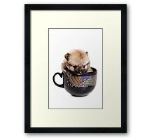 Funny Spitz puppy in the cup Framed Print