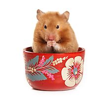 Funny red-haired hamster Photographic Print