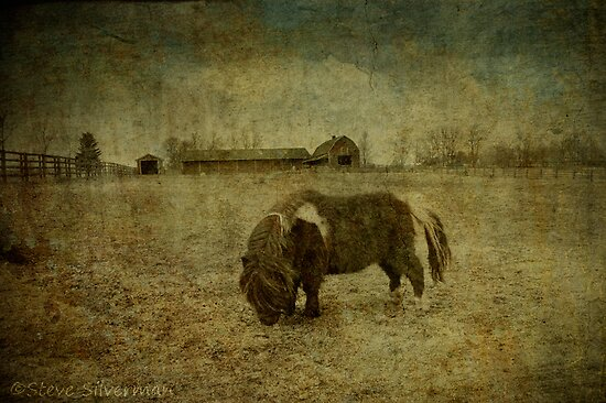 Grazing on Grunge by Steve Silverman