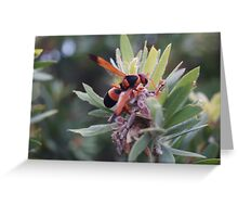 Wasp collecting pollen. Greeting Card