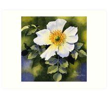 A Single Wild Rose Art Print