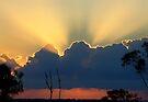 """""""Skywards"""" by debsphotos"""
