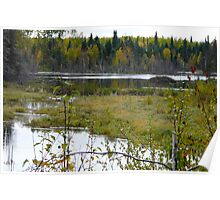 Beaver House and Dam Poster