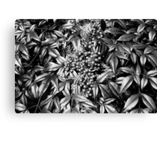 B/W Leaves and Berries  Canvas Print