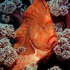 Hail to the Chief - Red Indianfish by daveharasti