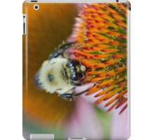 Bee on an Echinacea Flower iPad Case/Skin