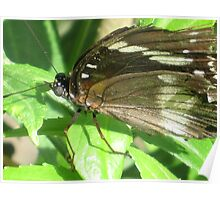 Butterfly..Macro Poster