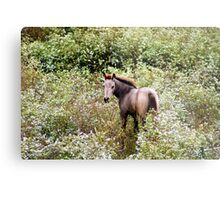 Young colt in the wild flowers Metal Print