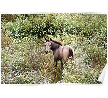 Young colt in the wild flowers Poster
