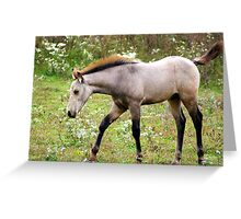 Young and Playful in the meadows of Springtime.... Greeting Card