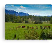 Cows Grazing In The Pasture Canvas Print