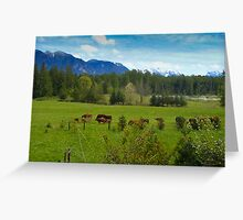 Cows Grazing In The Pasture Greeting Card