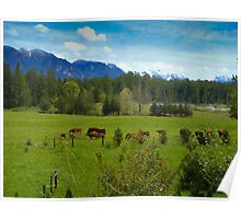 Cows Grazing In The Pasture Poster