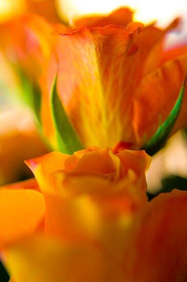 Orange Roses by Jaxybelle