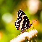 It's a Butterfly's Life by Ruby  Pen