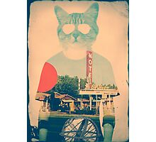 Cool Cat Photographic Print