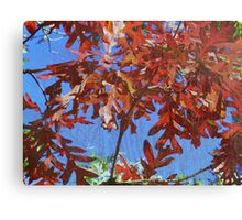 the attic window, where the leaves still dance to their favorite song Canvas Print