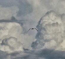 Cloud explorer.. by Amkia