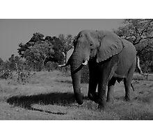 Elephant King Photographic Print