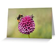 Bee and Fly punchup! Greeting Card