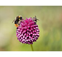 Bee and Fly punchup! Photographic Print