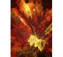 Splash of Autumn Photographic Print