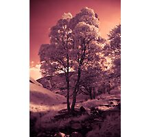 Walking in the Dream Wood - The Hill Photographic Print