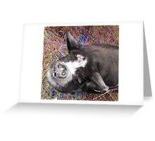 Disgusting Pig?..........I ham what I ham!..... Greeting Card