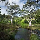 Onkaparinga Gorge (Porosa track) South Australia by rjpmcmahon