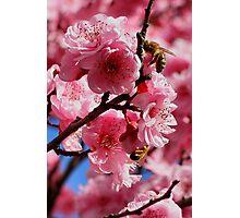 Blossum Photographic Print