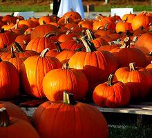 Pumpkin Patch by Wendy Mogul
