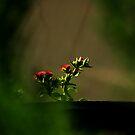 flowers by jayantilalparma